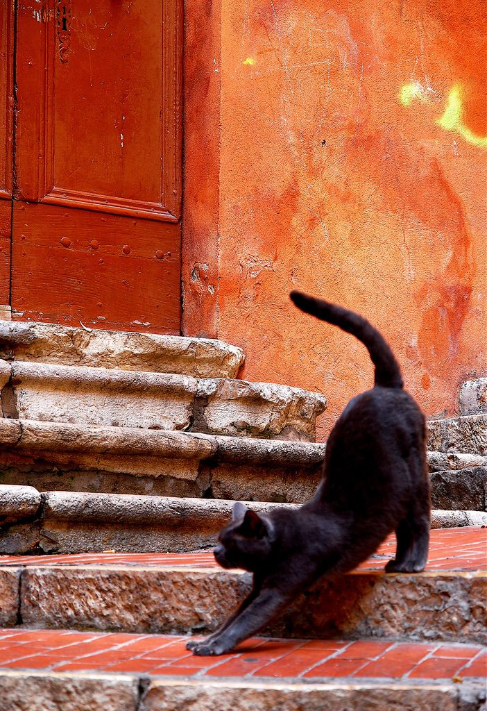 Black cat stretching peacefully on old brick steps-- orange terra cotta wall chipping away. Great antique key hole! #DdO:) MOST POPULAR RE-PINS - http://www.pinterest.com/DianaDeeOsborne/big-cats-little-cats/ - Porch like in Italy's or France's old quarters in their small city region, architecture type & color. Photo like MUSEUM ART. Red, black, & white were first colors used by artists- probably because natural pigments like iron oxide were readily available near caves where early people…