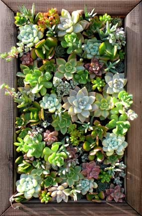 LOVE, LOVE, LOVE succulents...hens and chicks...you name it. Awesome idea for a reasonable sized vertical garden.