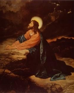Jesus In the Olive Tree Garden Gethsemane