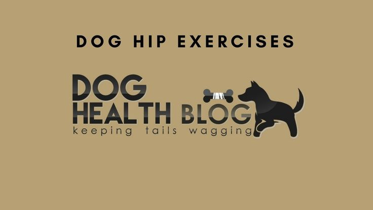Dog Hip Exercises can increase stability and strength in your dogs hips, preventing or reducing arthritis and hip dysplasia. Most dogs have a strength imbalance, with the hind legs being weaker than the front. Over time, this imbalance can create mechanical breakdown in the hip region. Please stay tuned for a series of videos detailing dog hip exercises that you can start at home. Please visit my e-store www.theinventoryexpress.com/collections/pet-gear  for FREE PET GEAR