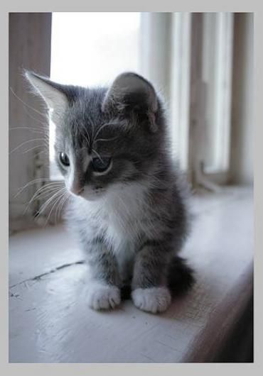 SO excited that jared and I are bringing home our very own grey and white kitten tomorrow! :D
