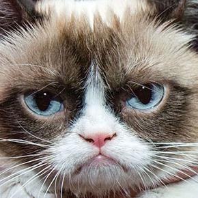 adı diyor. Hürriyet te yer alan habere göre Grumpy nin iki yılda kazandığı nakit, Hollywood ünlülerinin yahut yıllık geliri yaklaşık 42 milyon dolar olarak gösterilen Christiano Ronaldo bu gibi dünyaca ünlü futbolcuların gelirini çoktan geçmiş halde. Grumpy yi öteki kedilerden değişik yapan ise Bundesen in ifadesiyle cüce kedi olarak doğmuş olması ve cüceliğinin ona huysuz bir yüz ifadesi vermesi. Grumpy nin Facebook taki resmi sayfasının 1 milyondan çok takipçisi bulunuyor. The post Grumpy…