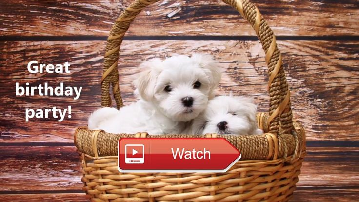 🐶 Happy Birthday Funny Dogs Breeds Messages Quotes Happy Birthday Funny Dogs Messages Quotes Send birthday greetings for friends or family…