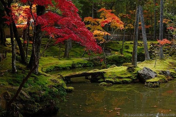 """Koke-dera, which means """"Moss Temple"""" is one of the most aptly named temples in Kyoto. It's a lush green paradise than can only be visited by application."""