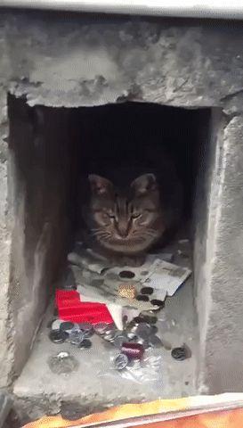 Greedy kitty