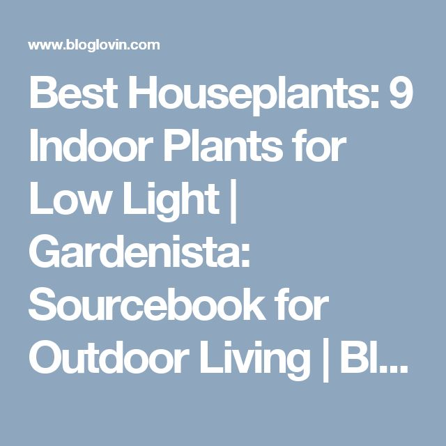 17 Best Ideas About Indoor Plants Low Light On Pinterest
