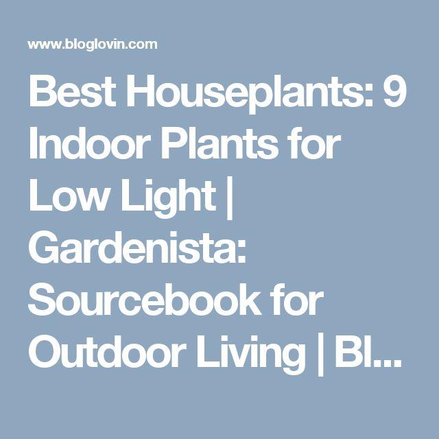 17 Best Ideas About Indoor Plants Low Light On Pinterest