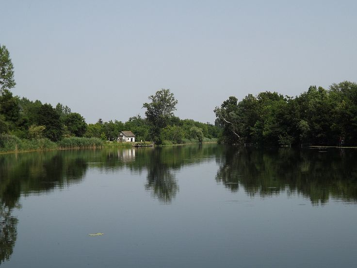 Backwater of the Danube in Serbia