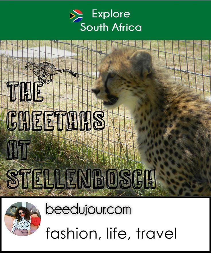 The Cheetah Outreach
