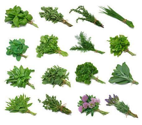 Πώς ξεχωρίζουμε και μαζεύουμε τα βότανα που υπάρχουν γύρω μας | aragma.gr - άραγμα στην ενημέρωση