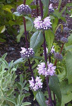 101 Best Zone 5 Flowers Images On Pinterest | Flower Gardening, Flowers And  Gardening