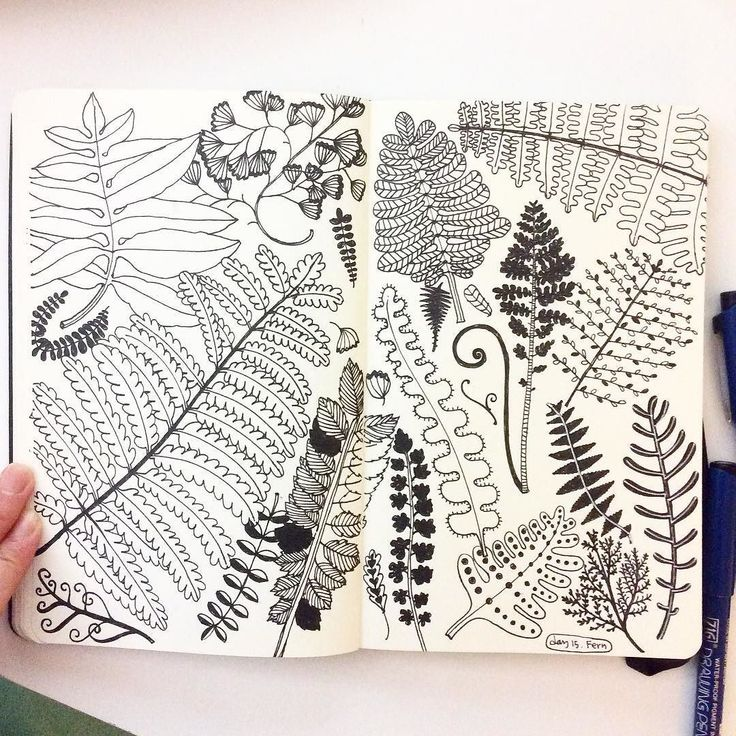 Day 15 Fern It's already half way down! #CBDrawADay #creativebug #doodle #sketchbook #moleskineart #linedrawing #fern by hee_cookingdiary