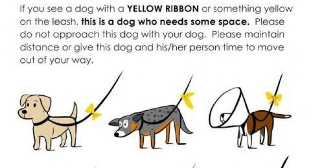 Τι σημαίνει η κίτρινη κορδέλα στο λουρί του σκύλου;  #yellowdogproject #adespoto #animals #animal  #dog #dogs #project #yellow_ribbon #love