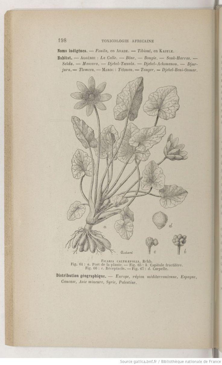 Ficaire, Toxicologie africaine : étude botanique, historique, ethnographique, chimique, physiologique,