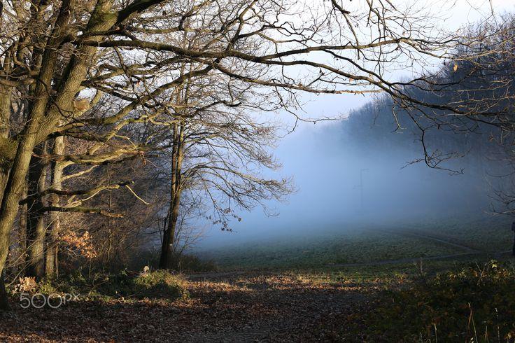 Foggy forest by Katalin Bölcskei - Photo 134799753 - 500px