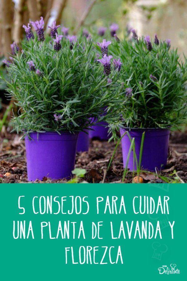 como cuidar una planta de lavanda Front Door Plants, Mystic Garden, My Secret Garden, Garden Care, Flower Show, Green Life, Naturally Beautiful, Garden Styles, Dream Garden
