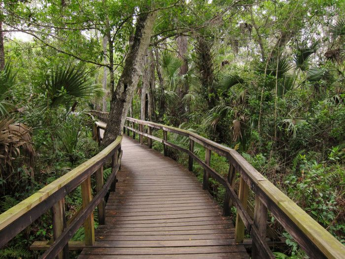 15. Fakahatchee Strand Preserve State Park:  Forested swamp featuring diverse wildlife, including panthers and black bears. Also the home of the legendary ghost orchid.