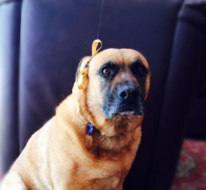 Dog Sara