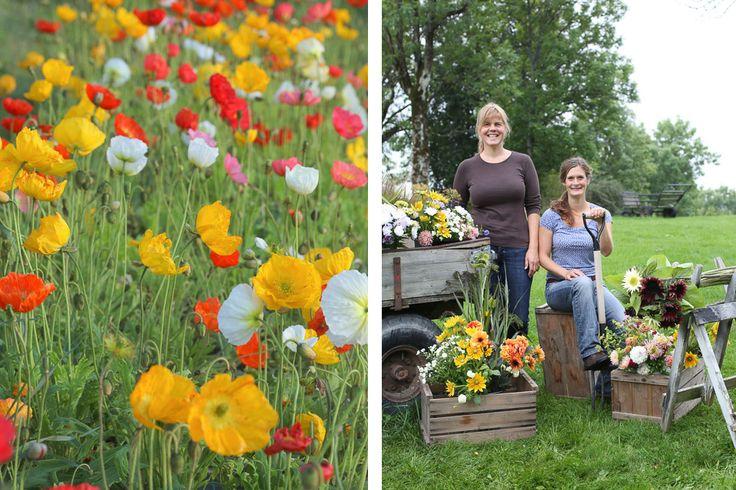 Blomsterhagen på Abildsø