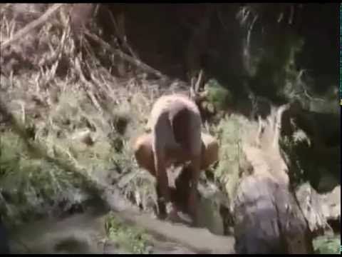 This is an accidental sighting of a Bigfoot Encounter caught on Video -during a documentary