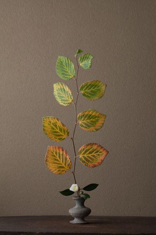 Ikebana by Toshiro Kawase, Japan by loulouhui