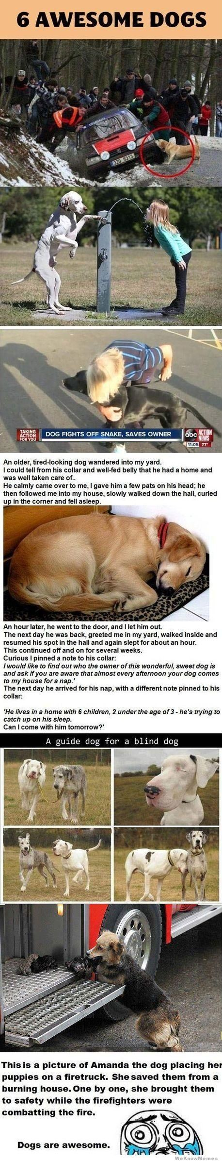 6 #awesome #dogs