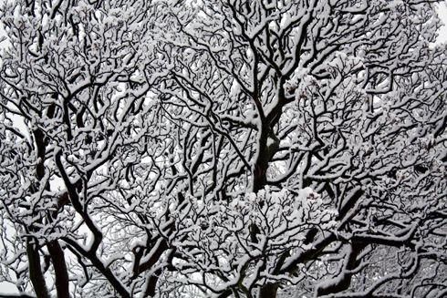 snow on tree by Mandy Jones www.thephotographerblog.com