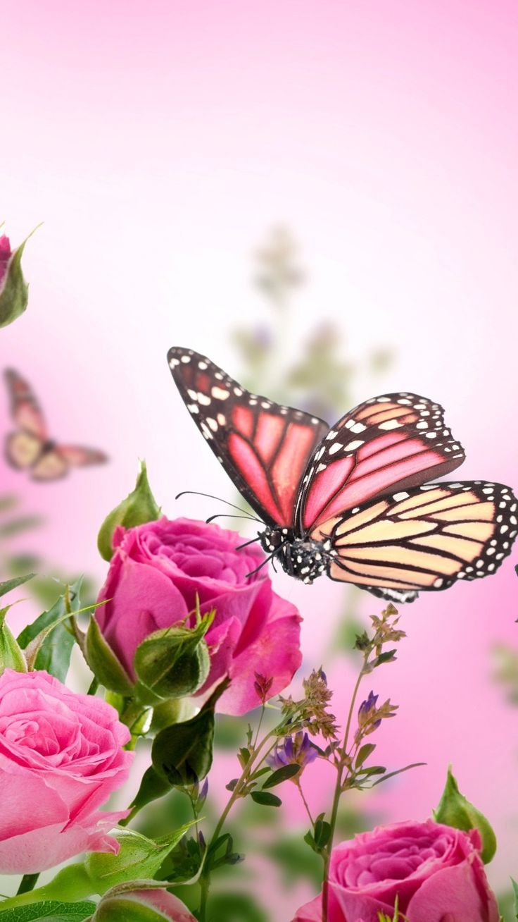 Pink-roses-flowers-butterflies_iphone | Flowery wallpaper ...