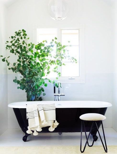 Cool Bathroom Plants 61 best plant goals images on pinterest | goals, indoor plants and