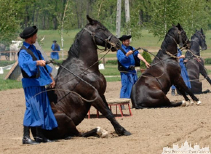 Horse-show in Hungary: • Four-in-hand driving, pony carriage driving, horsemen • Display of nomad warrior archery - archery on horseback, throwing a spear • Skills of the horsemen – making the horse lie down, cracking the whip, competition between the horsemen • Fun competition involving the guests: knocking a bottle with the whip • Cart pulled by four oxen • Humorous show with trained donkey • 'Queen Elisabeth's equestrian show in contemporary costume, riding in a side-saddle with hussars •…