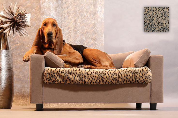 17 meilleures id es propos de chiens de taille moyenne for Lits superposes petite taille