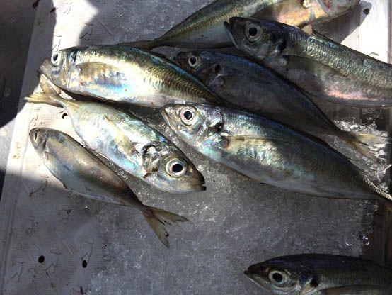 Leikeitio fish market