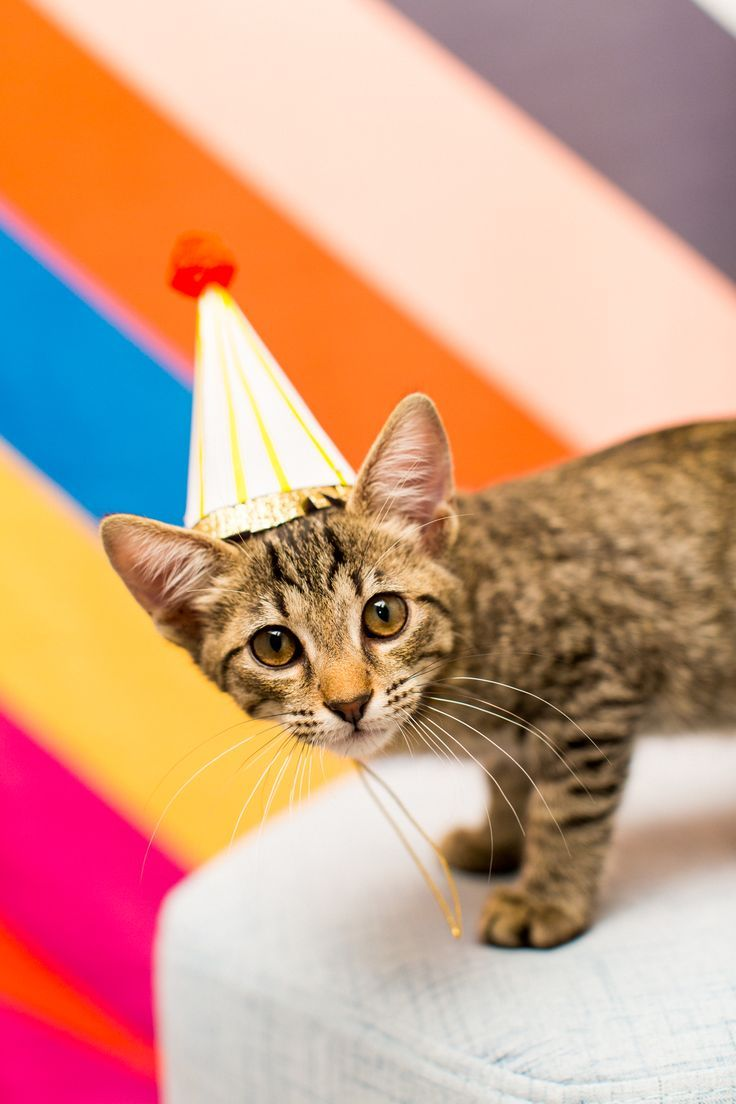 Giving Back: A FREE DIY Workshop at our Studio & BARC Houston Animal Adoption Event sponsored by @statefarm! - #animal #cat photography - by top Houston lifestyle blogger Ashley Rose of Sugar and Cloth