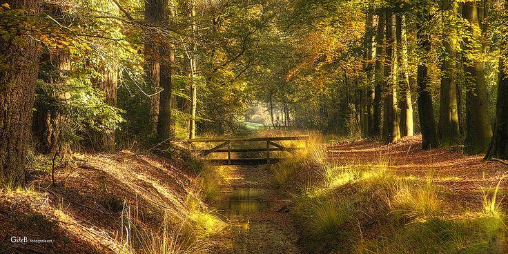 autumn colors - #GdeBfotografeert