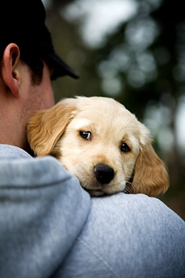 Must Love Dogs…….
