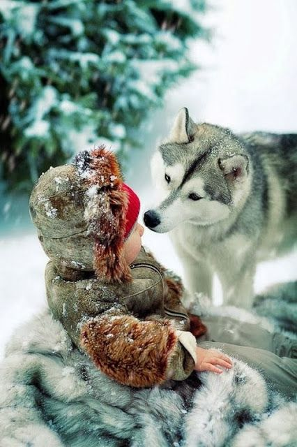 Siberian Husky.... and great parents for ...TEACHING YOUR CHILDREN ABOUT ANIMAL LOVE ...... :)