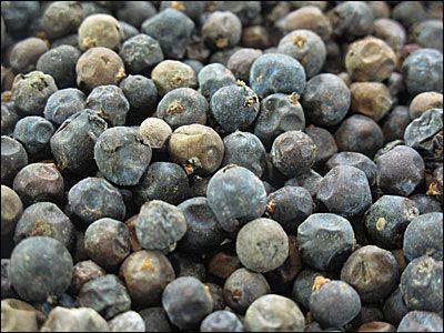 Ienupar (Juniperus communis )