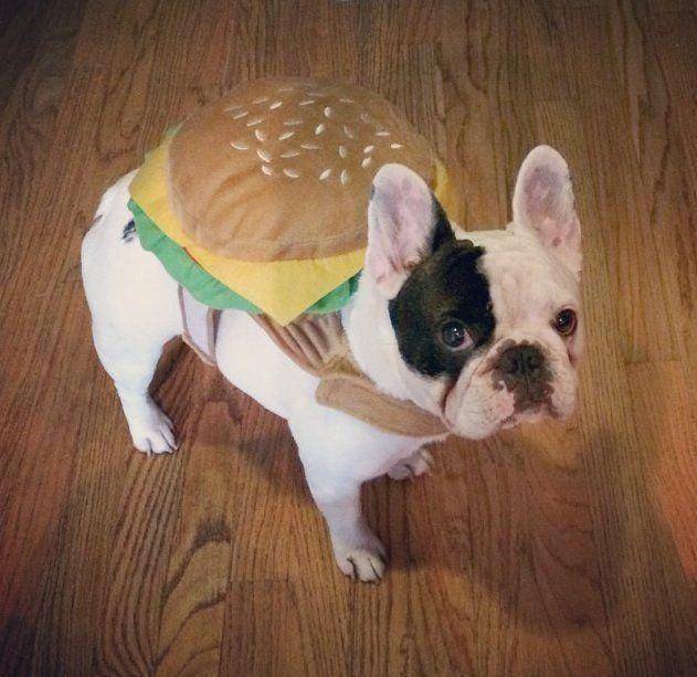 Find Out Additional Relevant Information On Frenchie Visit Our