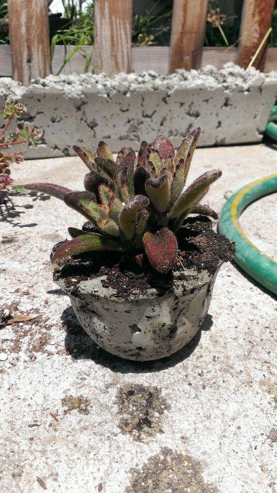 handmade cement pots!