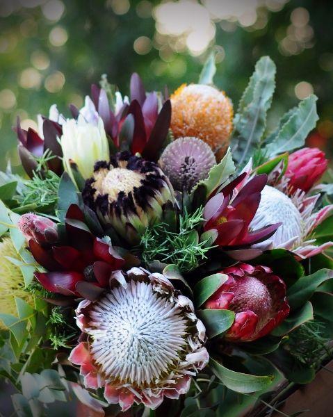 ️protea arrangement floralq™ pinterest