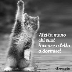 Alzi la mano chi...