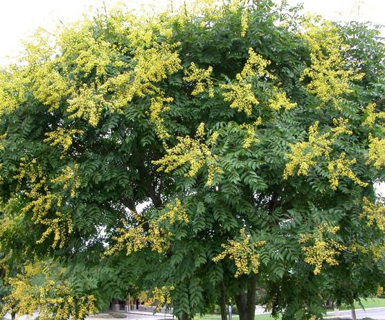 Plants That Bloom In Summer. Patio TreesHardscape DesignFlowering ...