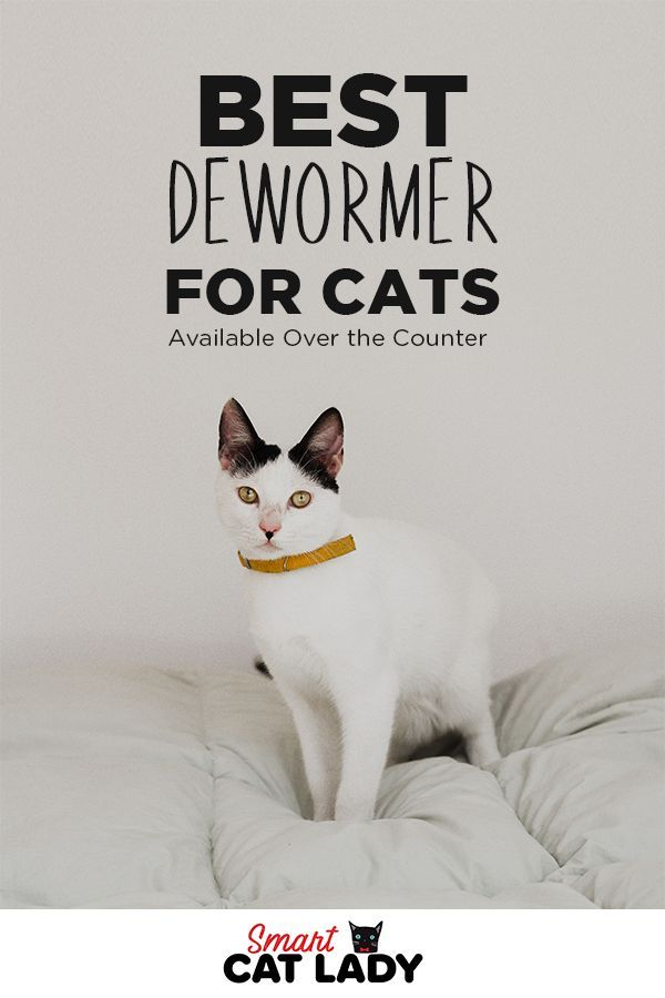 Best Dewormer For Cats Available Over The Counter Pet