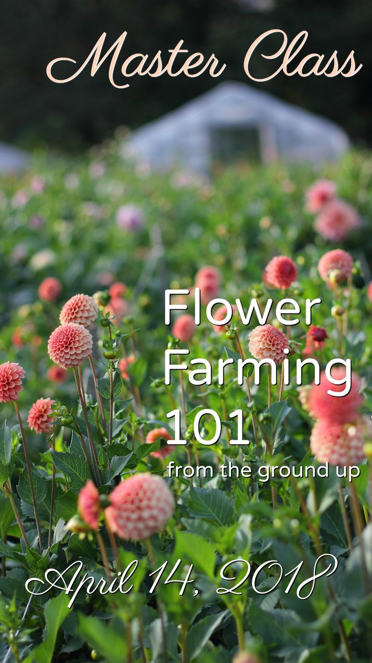 Flower Farming 101: From the Ground Up.  A Master Class for Farmer Florist hosted by Love 'n Fresh Flowers in Philadelphia.  Click for more info and to sign up. #flowerfarm #farmerflorist #flowerworkshop #floraldesign
