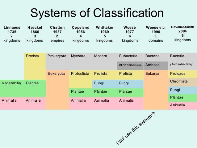 linnaeus classification - Google Search | CC challenge B ...