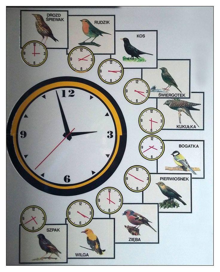 Tak budzą nas ptaki_połowa maja. wschód Słońca o 4.40