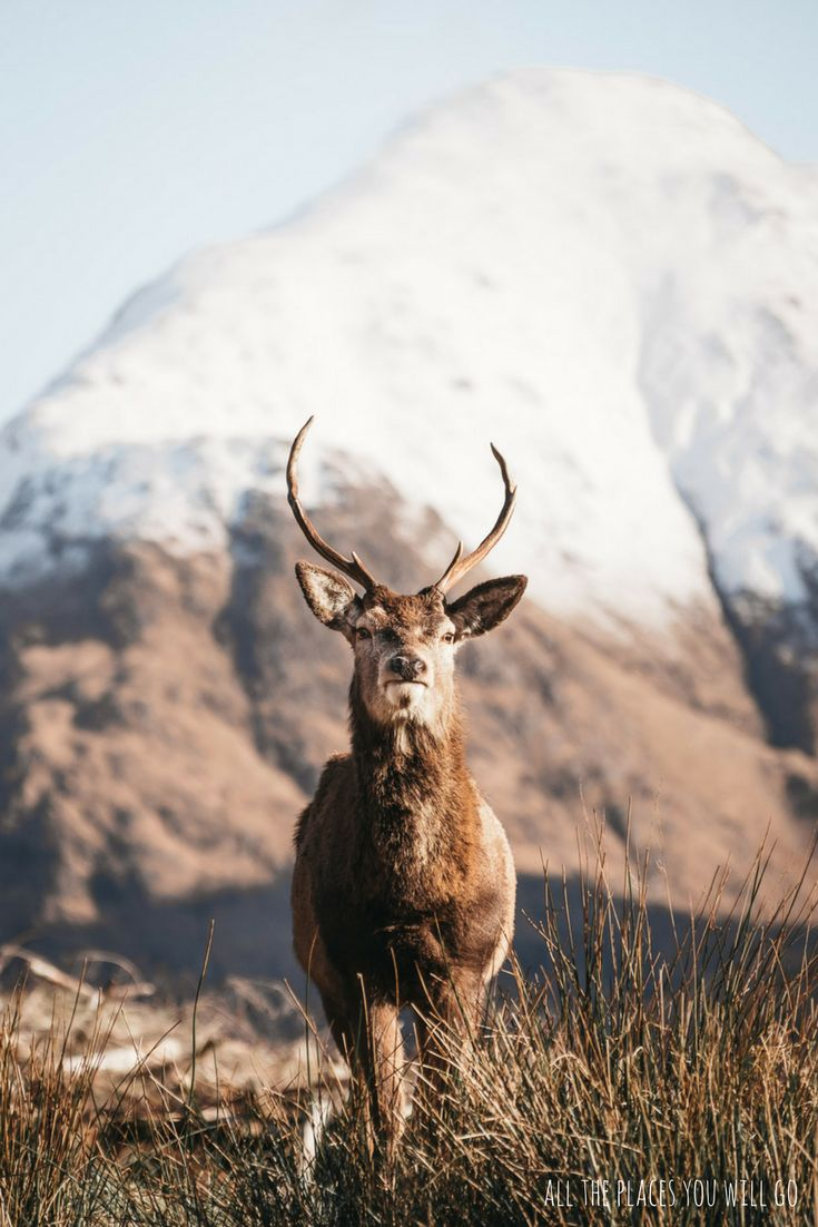 Glen Etive in Scotland - Read more about our trip from Glencoe to Isle of Skye!  Travel & Photography | All the places you will go