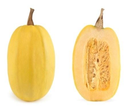 Spagettipumpa. Cucurbitaceae.