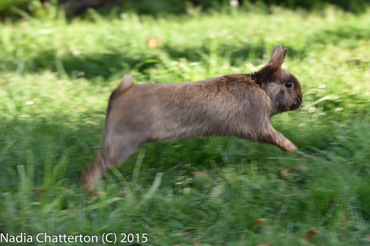 L1M2AS3- Shutter Priority I'm not real sure about the different shades on the grass here, with such a colour contrast from sunshine and darkness. However I am relatively happy with the sharpness of the rabbit in motion.  Handheld. Nikon D5500 f/6.3 1/125 ISO-200