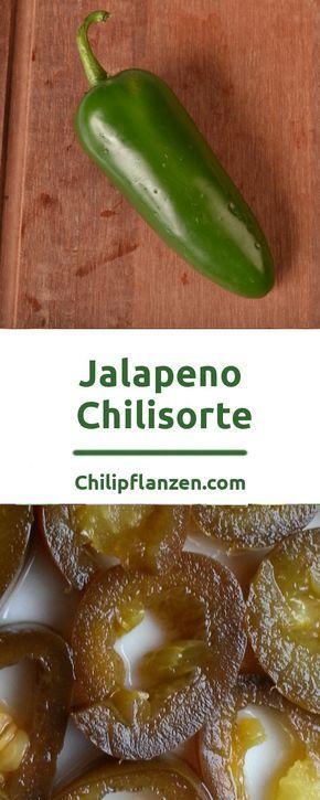 Jalapeno-Chilipflanzen sind simpel in der Anzucht. Deren Chilischoten können Sie schon grün ernten. Ob grün oder rot, sie lässt sich in vielen Rezepten hervorragend verwenden. Die knackigen Schoten haben eine angenehme Schärfe. Der leicht säuerliche Paprika-Geschmack ist perfekt für Saucen, Salate und gefüllte Chilischoten.